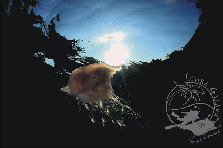 diving06