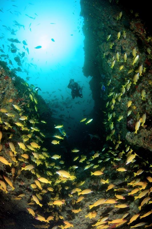 diving12